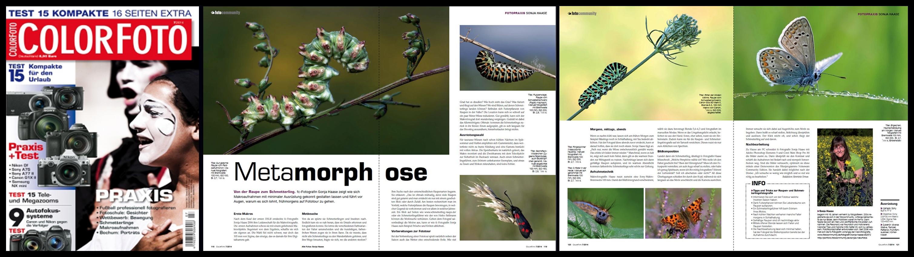 Auf diesen großen Artikel über die Makrofotografie bin ich sehr stolz.