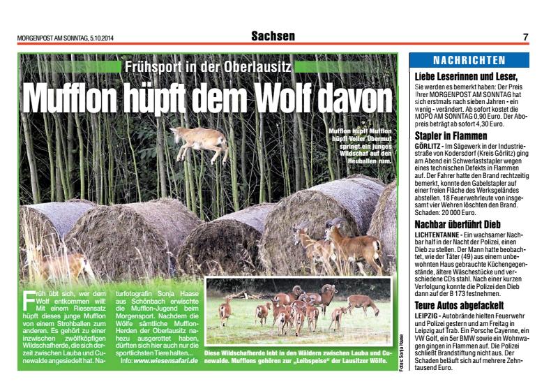 Mufflons, Mopo Sonntag 05.10.2014