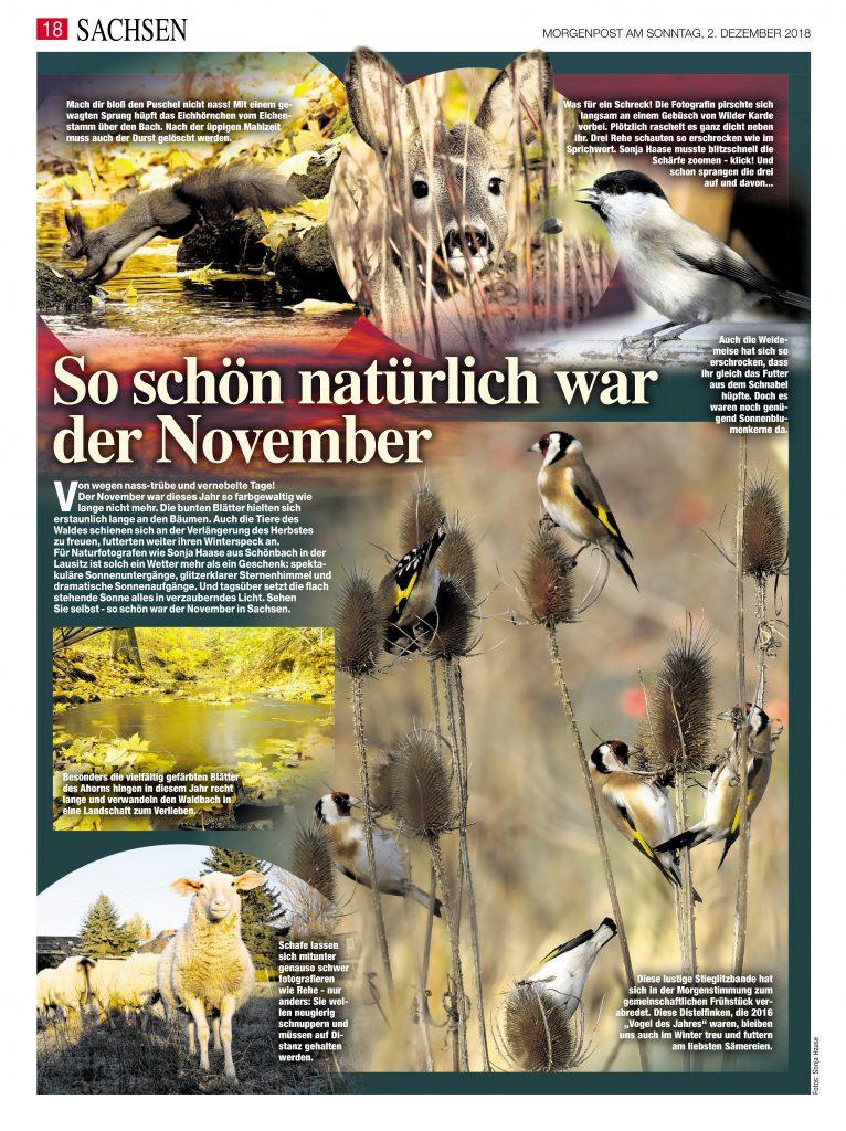Mit freundlicher Genehmigung der Morgenpost, 01.12.2018